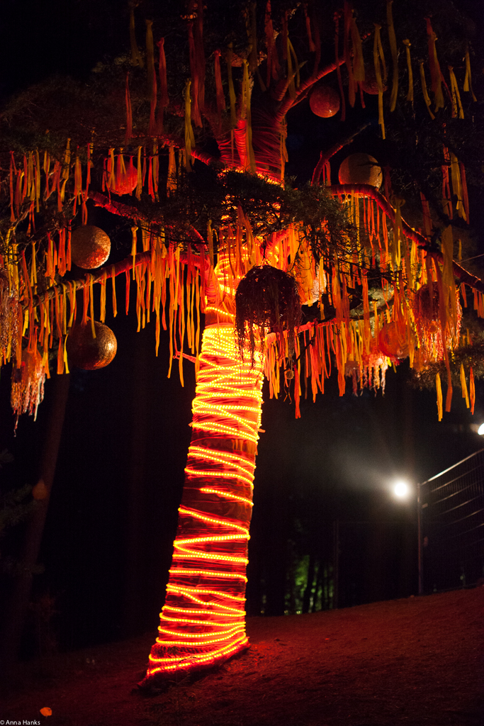Orange lit tree