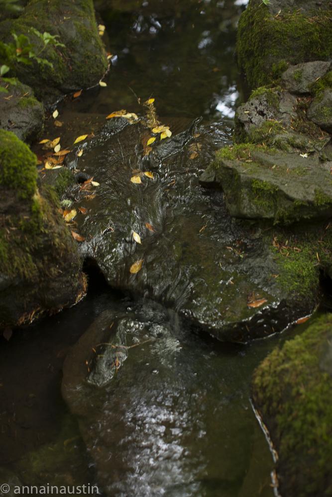 Portland Japanese Garden in Fall,  Portland, Oregon 2014-0217