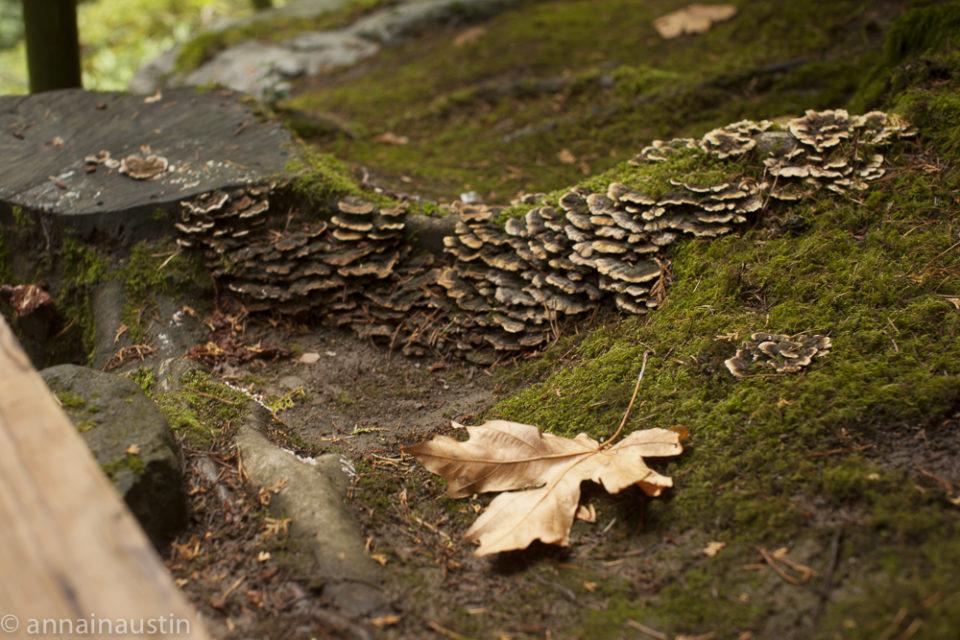 Portland Japanese Garden in Fall,  Portland, Oregon 2014-0227