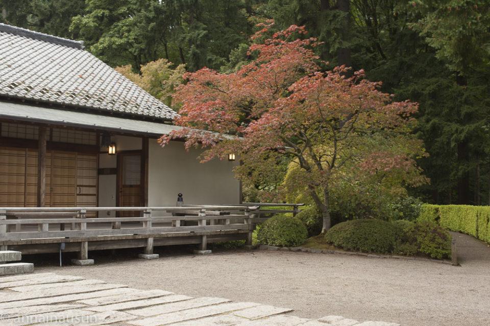 Portland Japanese Garden in Fall,  Portland, Oregon 2014-0250