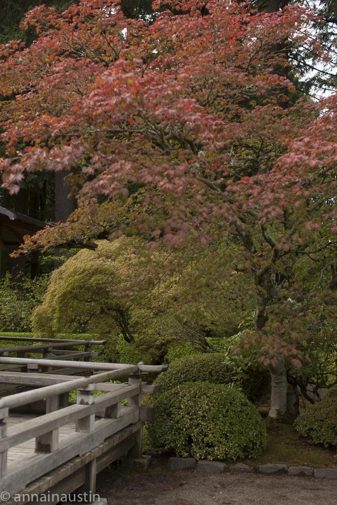 Portland Japanese Garden in Fall,  Portland, Oregon 2014-0274