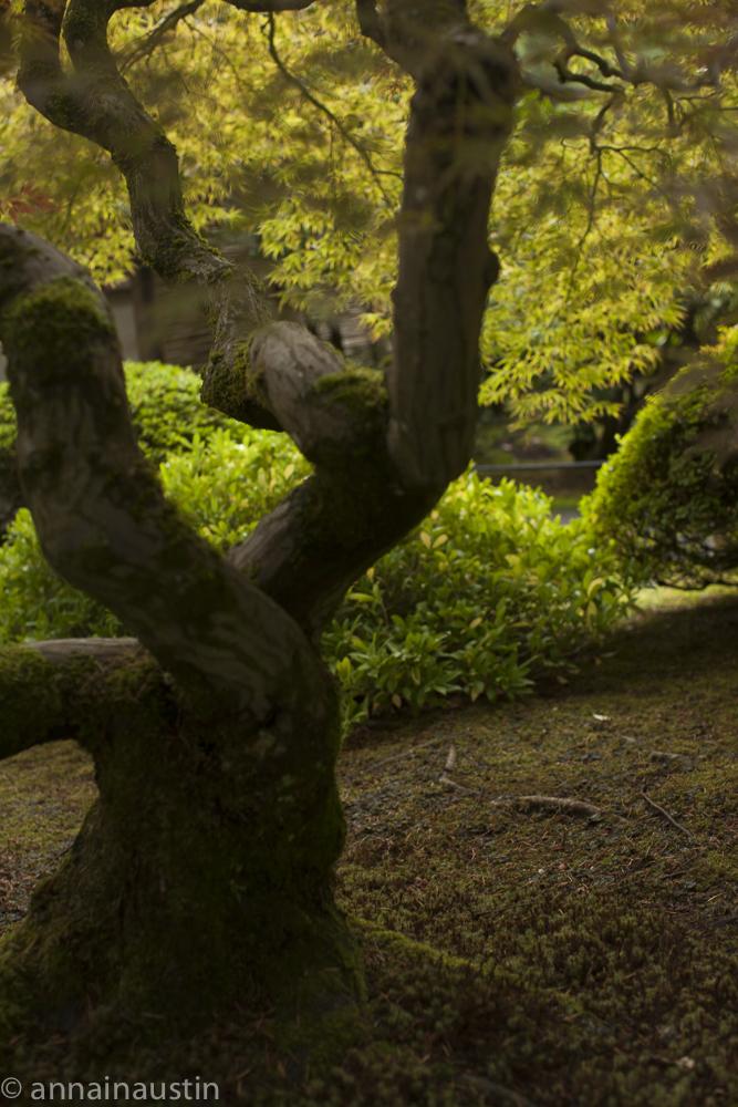 Portland Japanese Garden in Fall,  Portland, Oregon 2014-0283