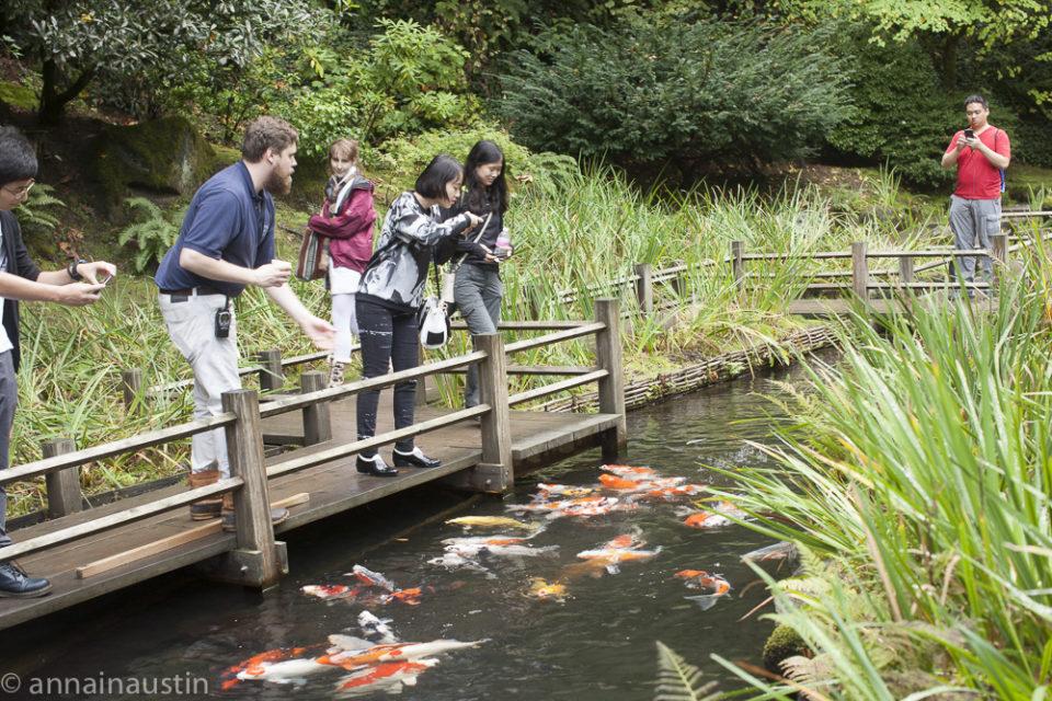 fish, Portland Japanese Garden in Fall,  Portland, Oregon 2014-0127